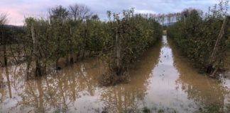Camps Inundats